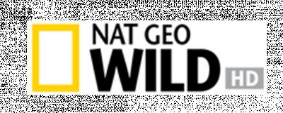 Nat Geo Wild Bearb